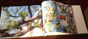 Buch_innen_3