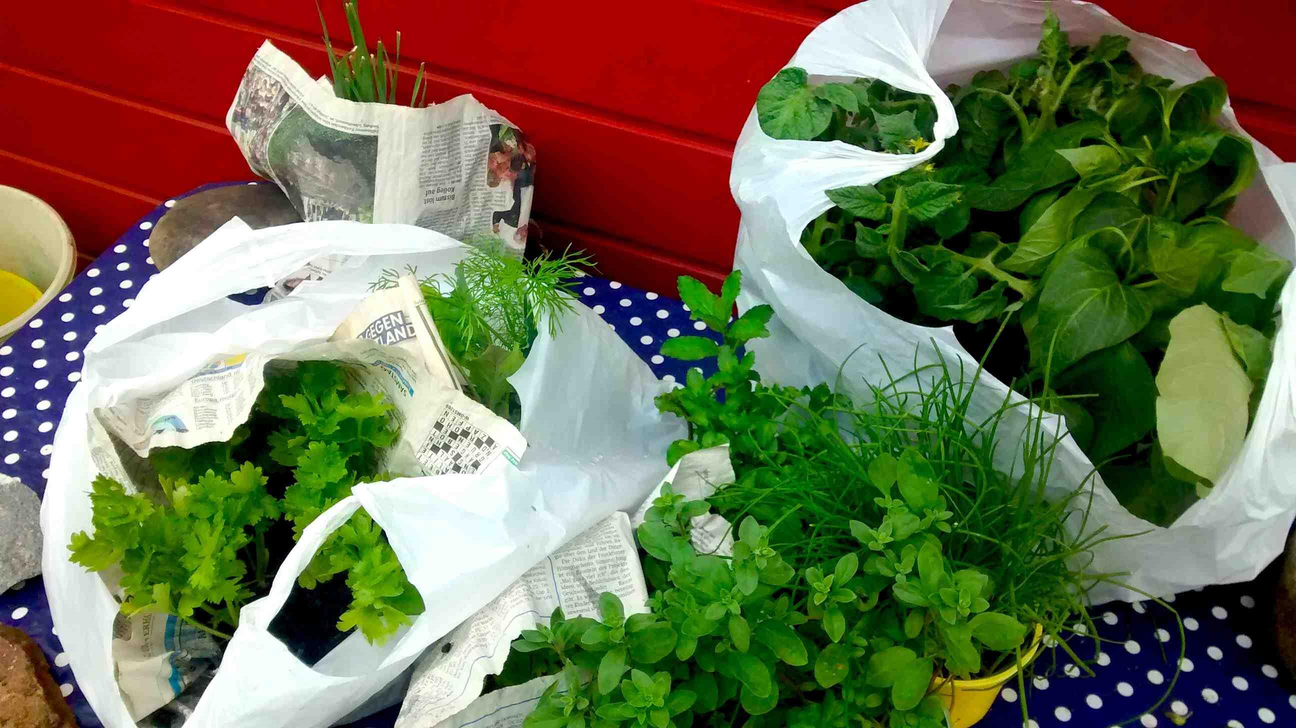 Pflanzen_Eingepackt