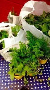 Pflanzen_eingepackt2